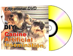 canine artificial insemination