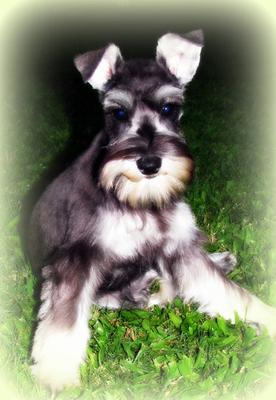 Dog Grooming Lawnton